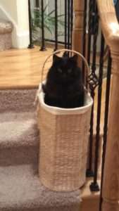 black cat sitting in a basket