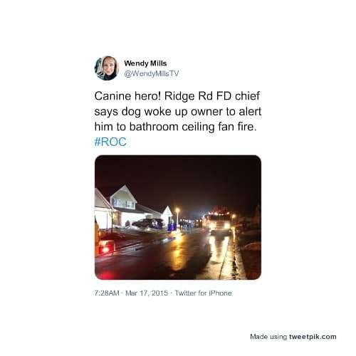 tweet about dog saving owner from bathroom fan fire
