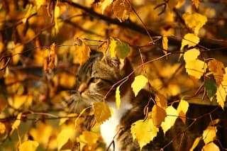 cat hidden in fall leaves