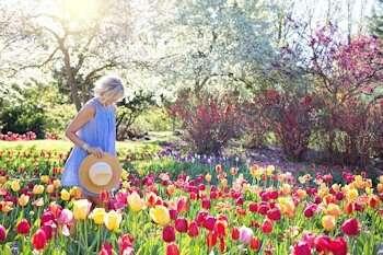 Make gardening safer for the elderly.