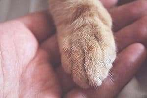 paw on someones hand