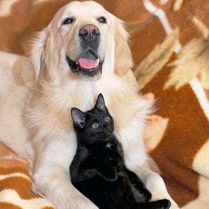 Safety tips for seniors and their pets
