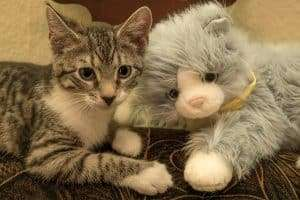 real cat with robot cat
